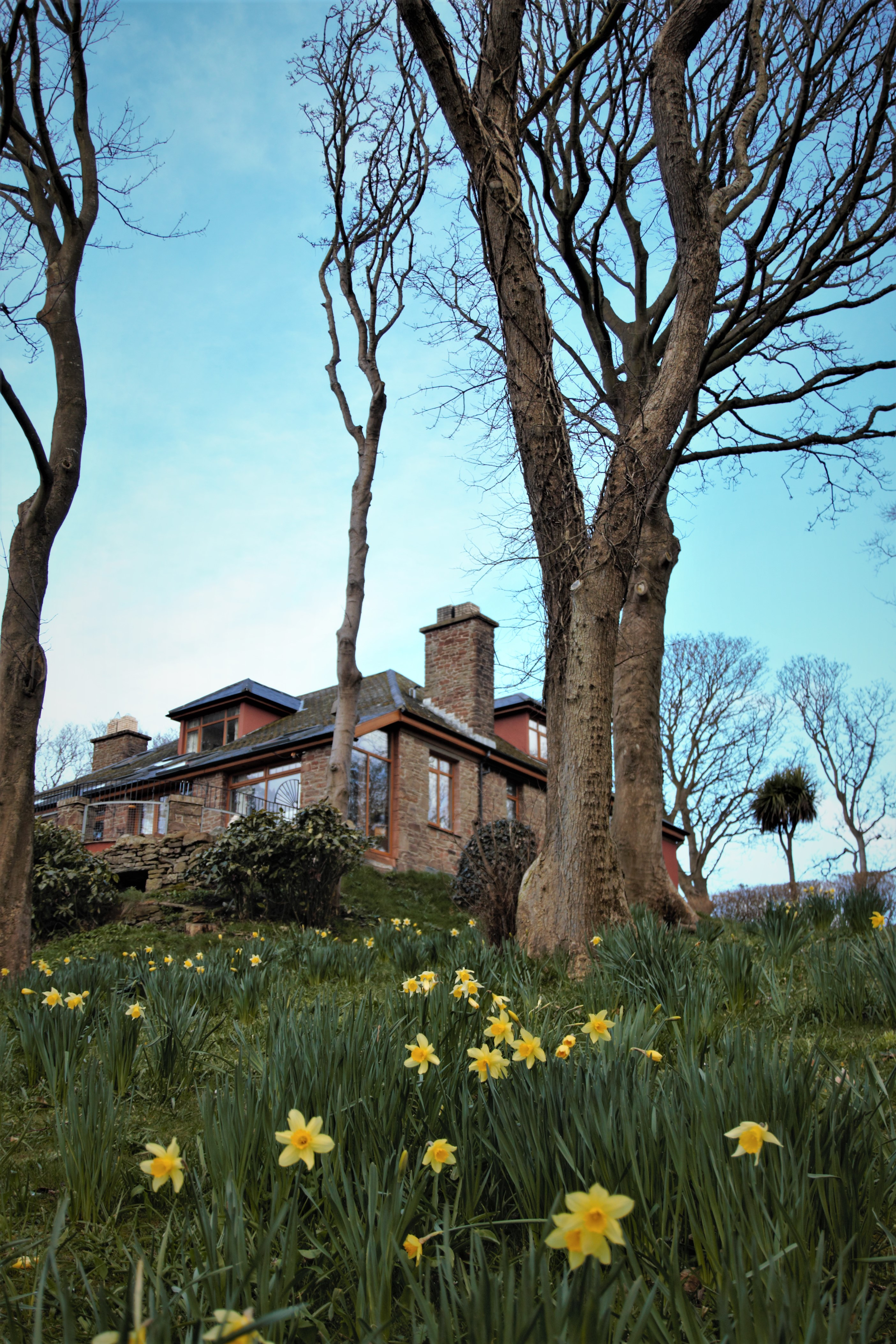 Daffodils at Langtoft Manor