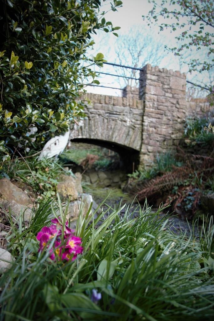 Flowers and bridge